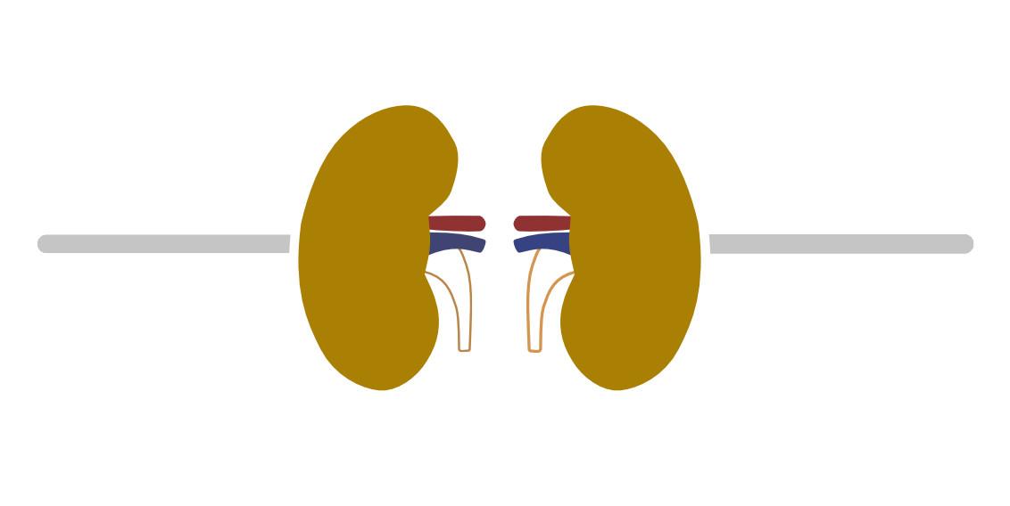 Nieren Erkrankungen